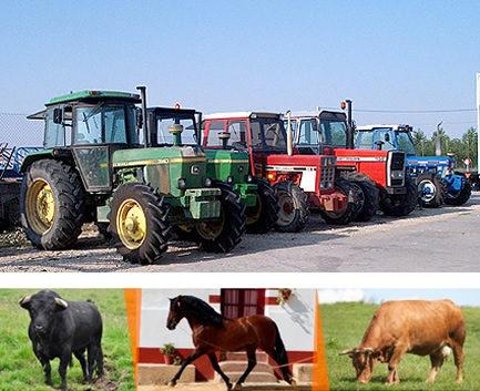 https://amvaluaciones.com/wp-content/uploads/2016/09/Valuación-de-animales-y-bienes-agropecuarios-ganado-433x353.jpg